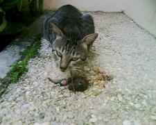 Keuntungan Memelihara Kucing Kampung Blog Yang Punye Boby Fahlevi