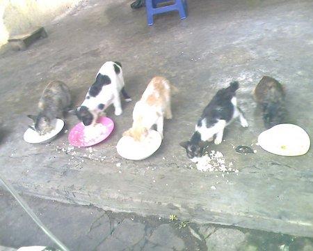 Keuntungan Memelihara Kucing Kampung Blog Yang Punye